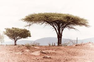 Awesome South Africa Collection - Savanna Trees XVIII by Philippe Hugonnard