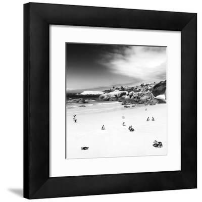 Awesome South Africa Collection Square - Colony of Penguins B&W
