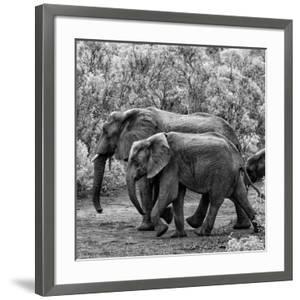 Awesome South Africa Collection Square - Elephant Family B&W by Philippe Hugonnard