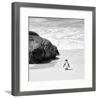 Awesome South Africa Collection Square - Penguin Alone on the Beach B&W