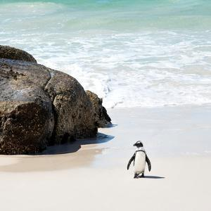 Awesome South Africa Collection Square - Penguin Alone on the Beach by Philippe Hugonnard