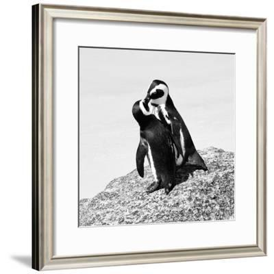 Awesome South Africa Collection Square - Penguin Lovers II B&W