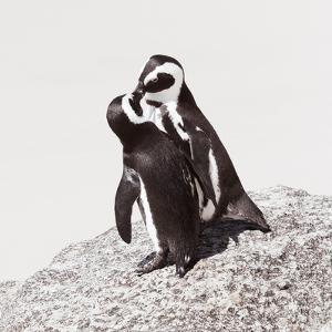 Awesome South Africa Collection Square - Penguin Lovers IV by Philippe Hugonnard