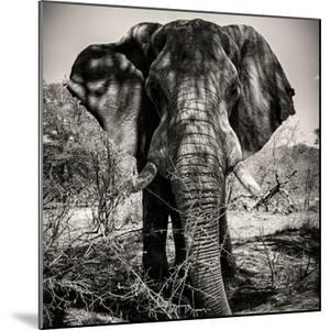 Awesome South Africa Collection Square - Portrait of African Elephant Sepia by Philippe Hugonnard