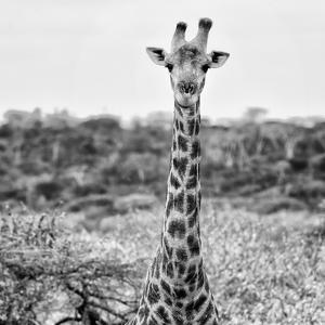 Awesome South Africa Collection Square - Portrait of Giraffe BW by Philippe Hugonnard