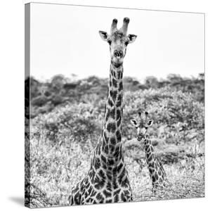 Awesome South Africa Collection Square - Portrait of Two Giraffes B&W by Philippe Hugonnard