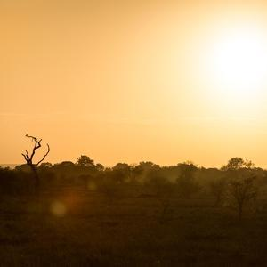 Awesome South Africa Collection Square - Safari Sunrise II by Philippe Hugonnard