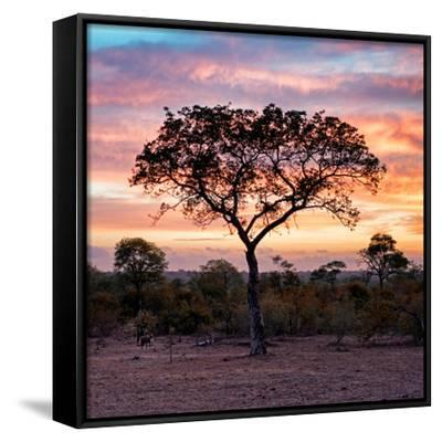 Awesome South Africa Collection Square - Silhouette of Acacia Tree at Sunrise by Philippe Hugonnard