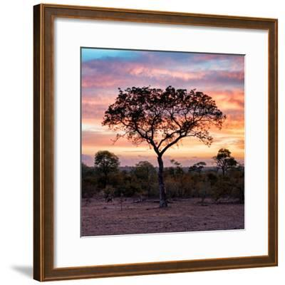 Awesome South Africa Collection Square - Silhouette of Acacia Tree at Sunrise