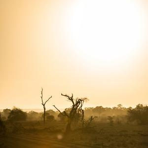 Awesome South Africa Collection Square - Sunrise in Savannah III by Philippe Hugonnard