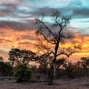 Awesome South Africa Collection Square - Sunrise over Savanna by Philippe Hugonnard