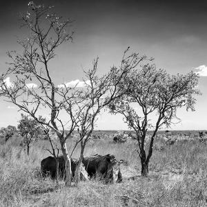 Awesome South Africa Collection Square - Two Rhino sleeping in the Savanna B&W by Philippe Hugonnard