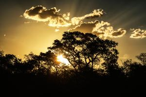 Awesome South Africa Collection - Trees Silhouette at Twilight on the Savanna by Philippe Hugonnard