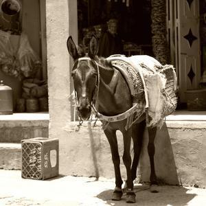 Berber Village - Atlas - Marrakesh - Morocco - North Africa - Africa by Philippe Hugonnard