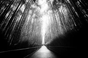 Black Japan Collection - Arashiyama Bamboo Forest by Philippe Hugonnard