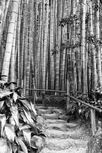 Black Japan Collection - Between Bamboos by Philippe Hugonnard