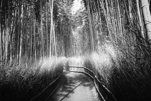 Black Japan Collection - Kyoto Bamboo Trail by Philippe Hugonnard
