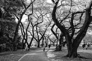 Black Japan Collection - Majestic Trees by Philippe Hugonnard