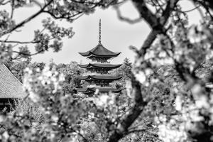 Black Japan Collection - Pagoda Cherry Blossom by Philippe Hugonnard
