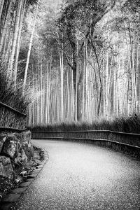Black Japan Collection - Path to Bamboo Forest by Philippe Hugonnard