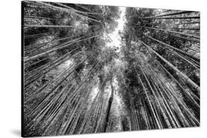 Black Japan Collection - Sagano Bamboo Forest by Philippe Hugonnard