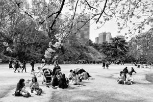 Black Japan Collection - Sunday afternoon in Spring by Philippe Hugonnard
