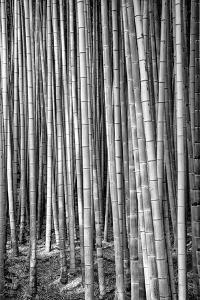Black Japan Collection - Thousand and one Bamboos by Philippe Hugonnard