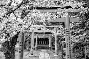 Black Japan Collection - Yoshida Shrine Torii by Philippe Hugonnard