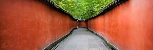 China 10MKm2 Collection - Alley Bamboo by Philippe Hugonnard