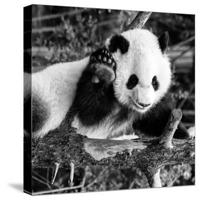 China 10MKm2 Collection - Giant Panda Baby