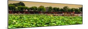 China 10MKm2 Collection - Lotus Flowers - Beihai Park by Philippe Hugonnard