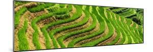 China 10MKm2 Collection - Rice Terraces - Longsheng Ping'an - Guangxi by Philippe Hugonnard