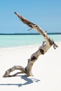 Cuba Fuerte Collection - Alone on the White Sandy Beach II by Philippe Hugonnard