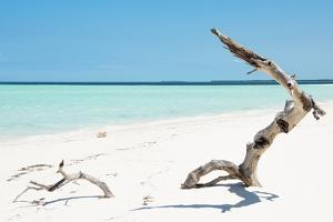 Cuba Fuerte Collection - Alone on the White Sandy Beach by Philippe Hugonnard