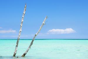 Cuba Fuerte Collection - Aquatic Tree II by Philippe Hugonnard