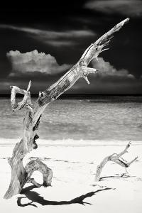 Cuba Fuerte Collection B&W - Trees and White Sand IX by Philippe Hugonnard