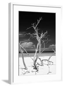 Cuba Fuerte Collection B&W - Trees and White Sand VI by Philippe Hugonnard