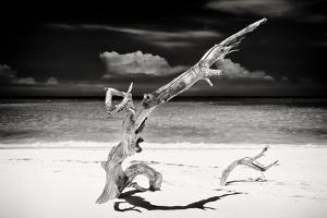 Cuba Fuerte Collection B&W - Trees and White Sand VII by Philippe Hugonnard