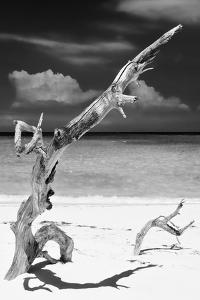Cuba Fuerte Collection B&W - Trees and White Sand X by Philippe Hugonnard