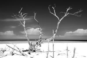 Cuba Fuerte Collection B&W - Trees and White Sand by Philippe Hugonnard