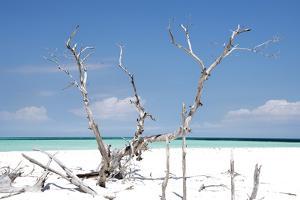 Cuba Fuerte Collection - Beautiful Wild Beach by Philippe Hugonnard