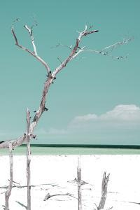 Cuba Fuerte Collection - Coral Green Serenity by Philippe Hugonnard