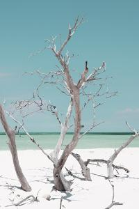 Cuba Fuerte Collection - Coral Green Stillness II by Philippe Hugonnard