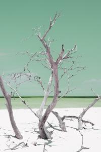 Cuba Fuerte Collection - Green Stillness II by Philippe Hugonnard