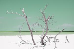 Cuba Fuerte Collection - Green Stillness by Philippe Hugonnard