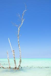 Cuba Fuerte Collection - Ocean Nature by Philippe Hugonnard