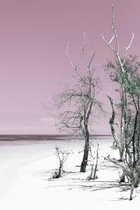 Cuba Fuerte Collection - Pale Violet Summer by Philippe Hugonnard