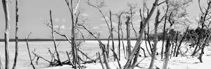 Cuba Fuerte Collection Panoramic BW - Tropical Wild Beach by Philippe Hugonnard