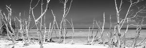 Cuba Fuerte Collection Panoramic BW - Wild Beach by Philippe Hugonnard