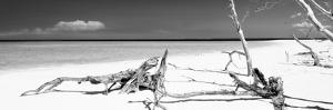 Cuba Fuerte Collection Panoramic BW - Wild Laggon by Philippe Hugonnard
